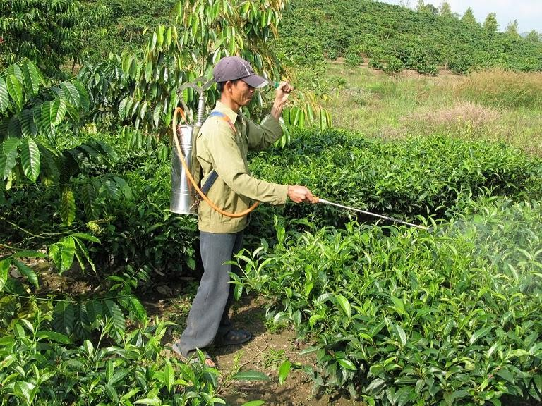 Produtores agrícolas podem continuar a usar pesticidas desde que frequentem formação até Maio
