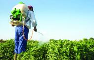 FITOFÁRMACOS: Agricultura de auto-consumo isenta de formação