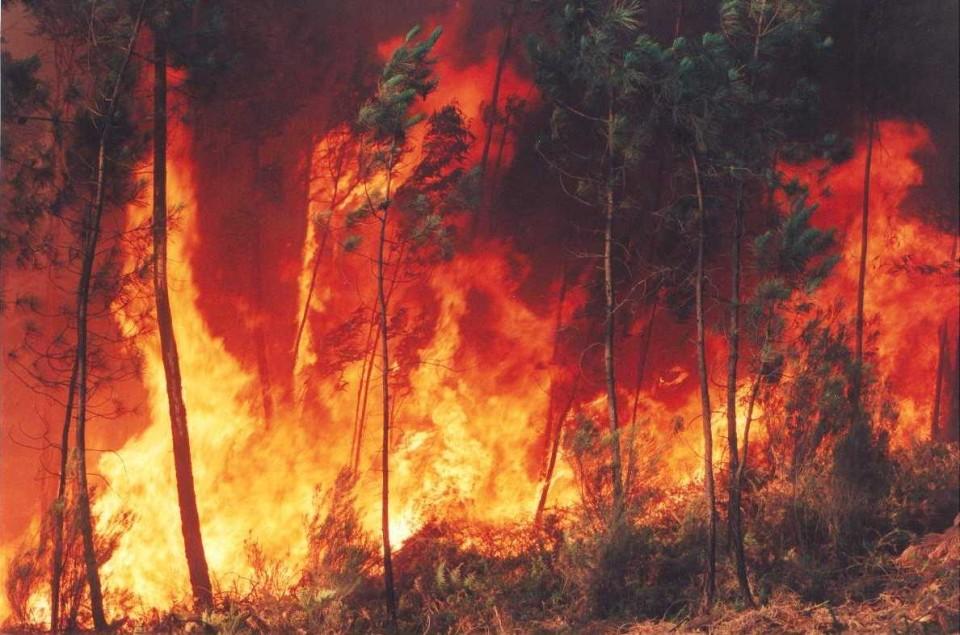 """MP e defesa dizem que sexagenário detido a incendiar  mato em Vila Verde não é """"perigoso"""""""
