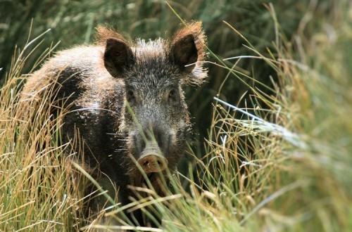 Vai ter de pagar 250 euros por crime de caça ilegal em Terras de Bouro