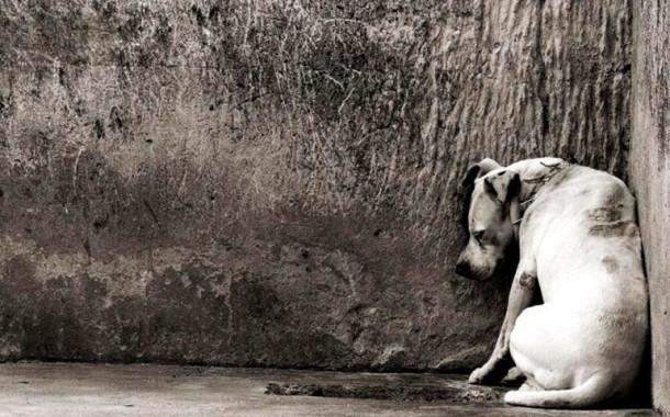 Braga no top 5 de maus-tratos a animais de companhia