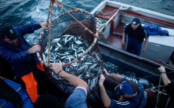 """Pesca da sardinha interdita por 15 anos? """"Não é preciso dramatizar"""""""
