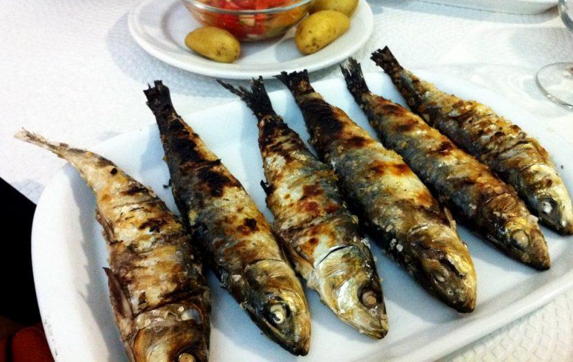 """Proibição de pesca da sardinha é  """"impensável"""", diz ministra do Mar"""