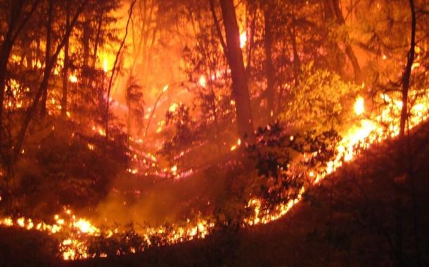 FOGOS FLORESTAIS: Já arderam quase 120 mil hectares desde o início do ano