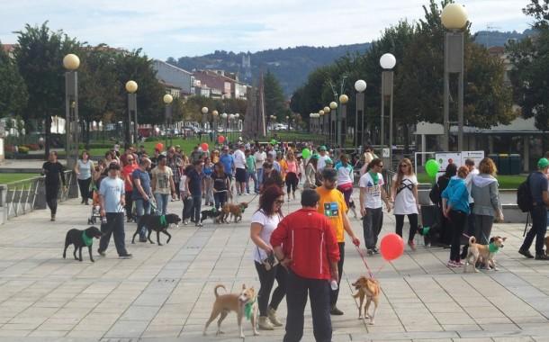 """Associação de Vila Verde organiza """"cãominhada"""" no próximo sábado"""