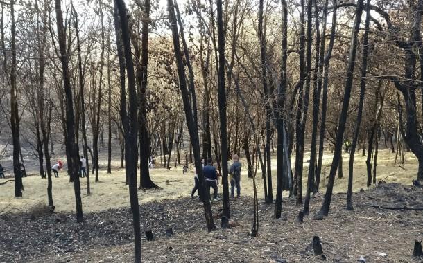 Braga implementa medidas anti-erosão dos solos pós-incêndios