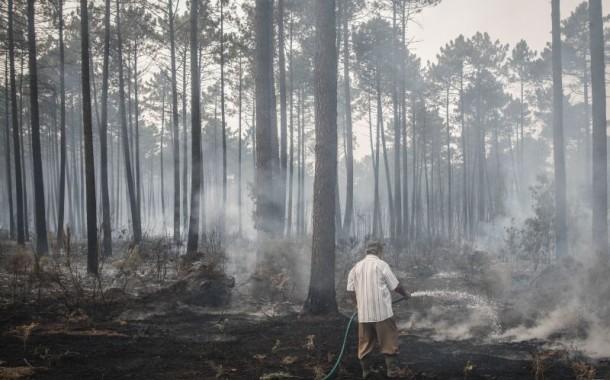 INCÊNDIOS: Agricultores afectados pelos fogos de Outubro começam a receber apoios