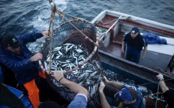 Pesca da sardinha proibida até Maio