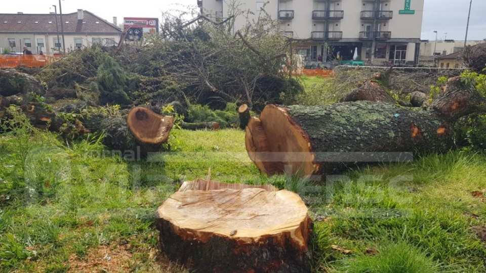 "Vila Verde: José Morais classifica corte de árvores no Largo Antunes Lima como um ""crime ambiental"