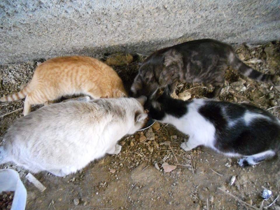 Braga para Todos pede a Ricardo Rio nova verba para o programa de controle de colónias de gatos vadios