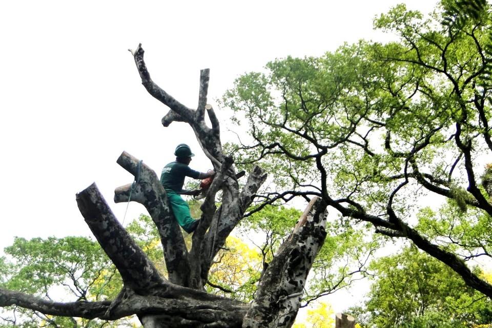 """""""Braga necessita urgentemente de um plano de arborização sério"""", avisa BE"""