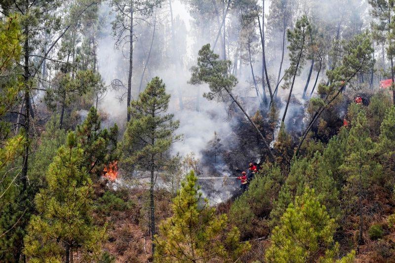 Caminha - Aldeias da serra d'Arga recebem no sábado meios para combater fogos