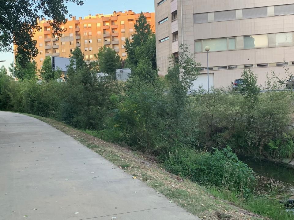 """Braga para Todos denuncia """"tamanho elevado"""" da vegetação nos separadores das ruas e nas margens do rio Este"""