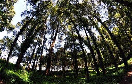 """PSD acusa ICNF de abate """"cego"""" de árvores na Mata do Camarido em Caminha"""