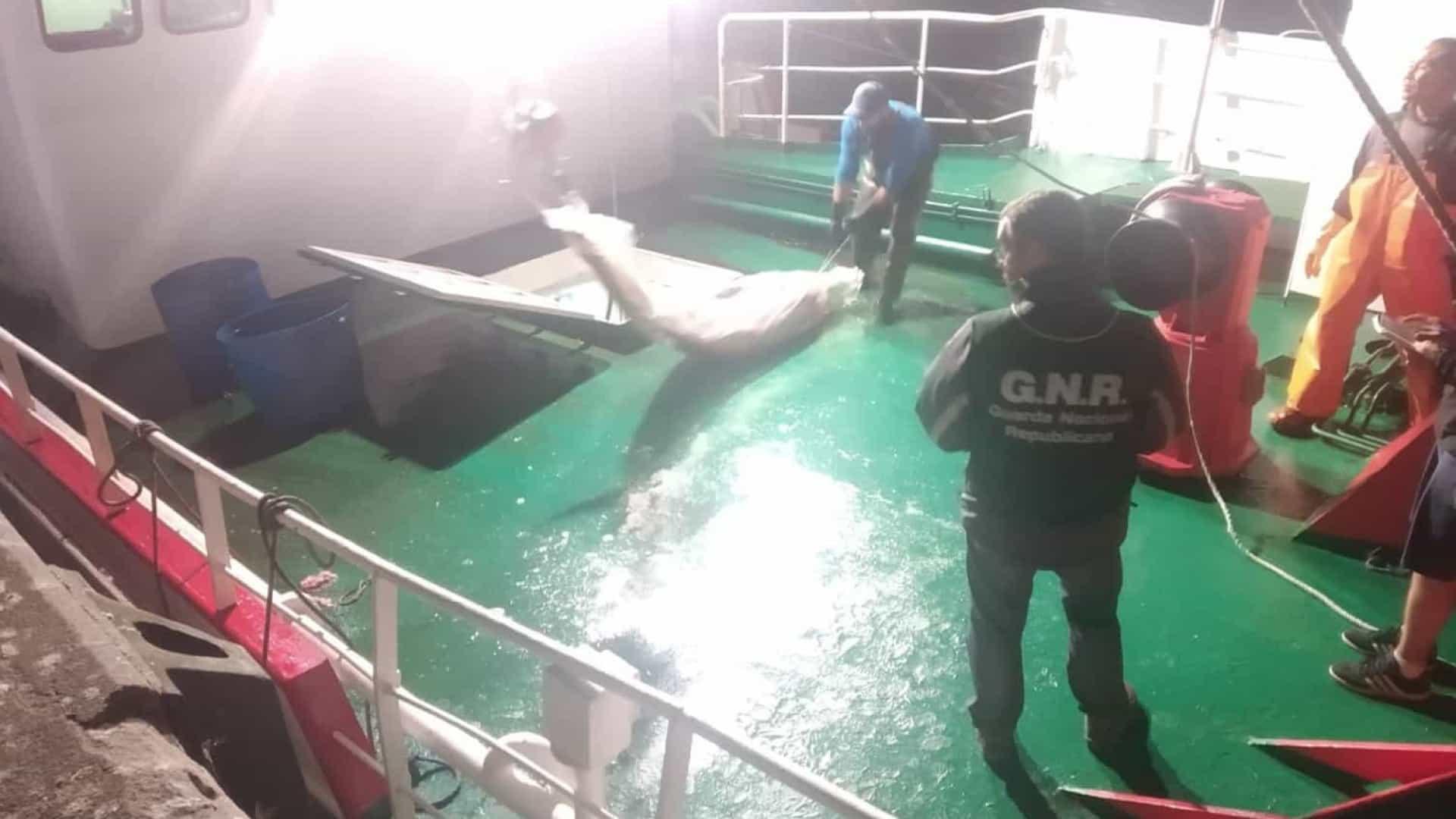 GNR apreende atum e espadarte no valor de 190 mil euros em Viana do Castelo