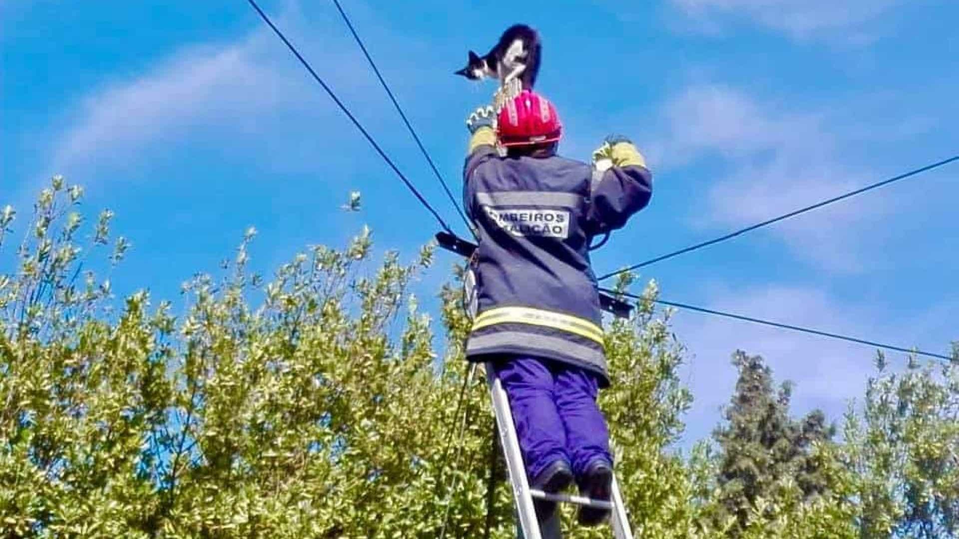 Bombeiros resgatam gato de poste de electricidade em Famalicão