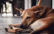 PAN questiona Câmara de Barcelos sobre políticas de bem-estar animal