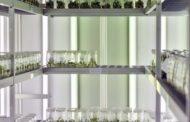 Bloco defendeu em Braga mais investimento público na adaptação da agricultura às alterações climáticas
