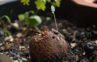Câmara desafia entidades a lançar 'granadas de sementes' para florestar Braga