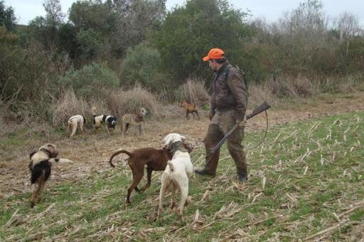 """PAN questiona Câmara de Vizela sobre """"envenenamento em massa"""" de cães de caça"""