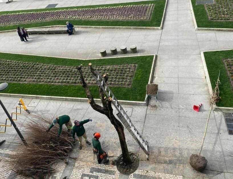 BE não aceita explicação sobre abate de árvores no centro de Braga