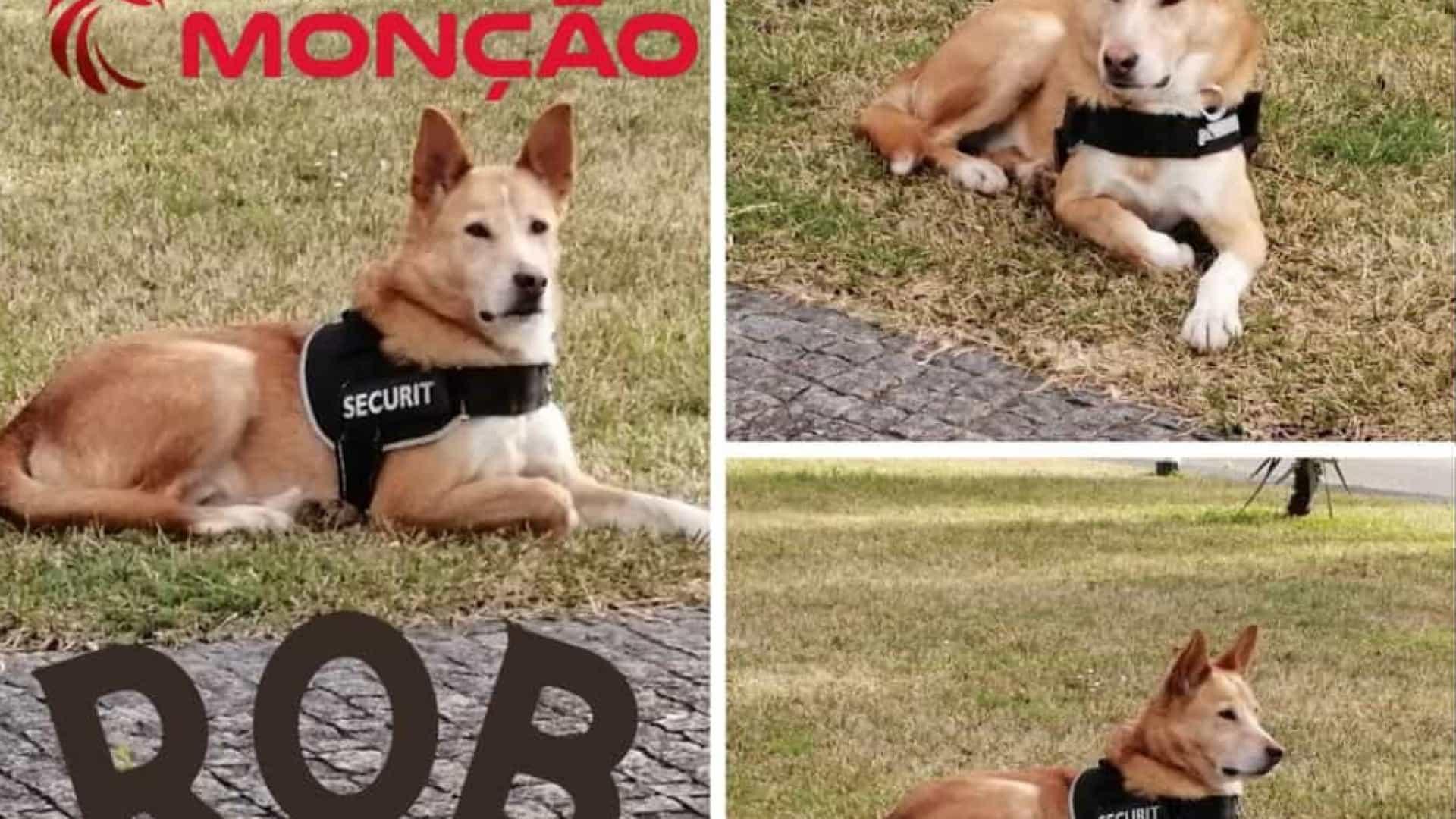 Rob, o cão abandonado que agora é mascote dos Bombeiros de Monção