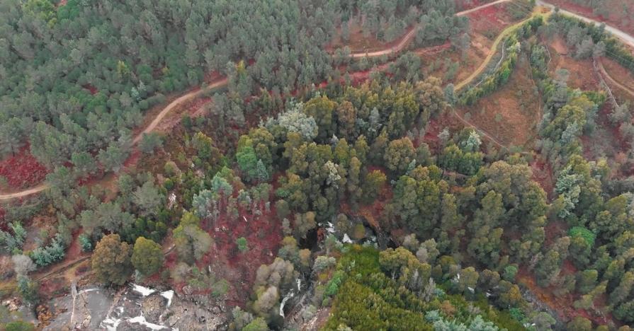 Viana do Castelo lança programa Árvores da Memória para classificar exemplares de interesse municipal
