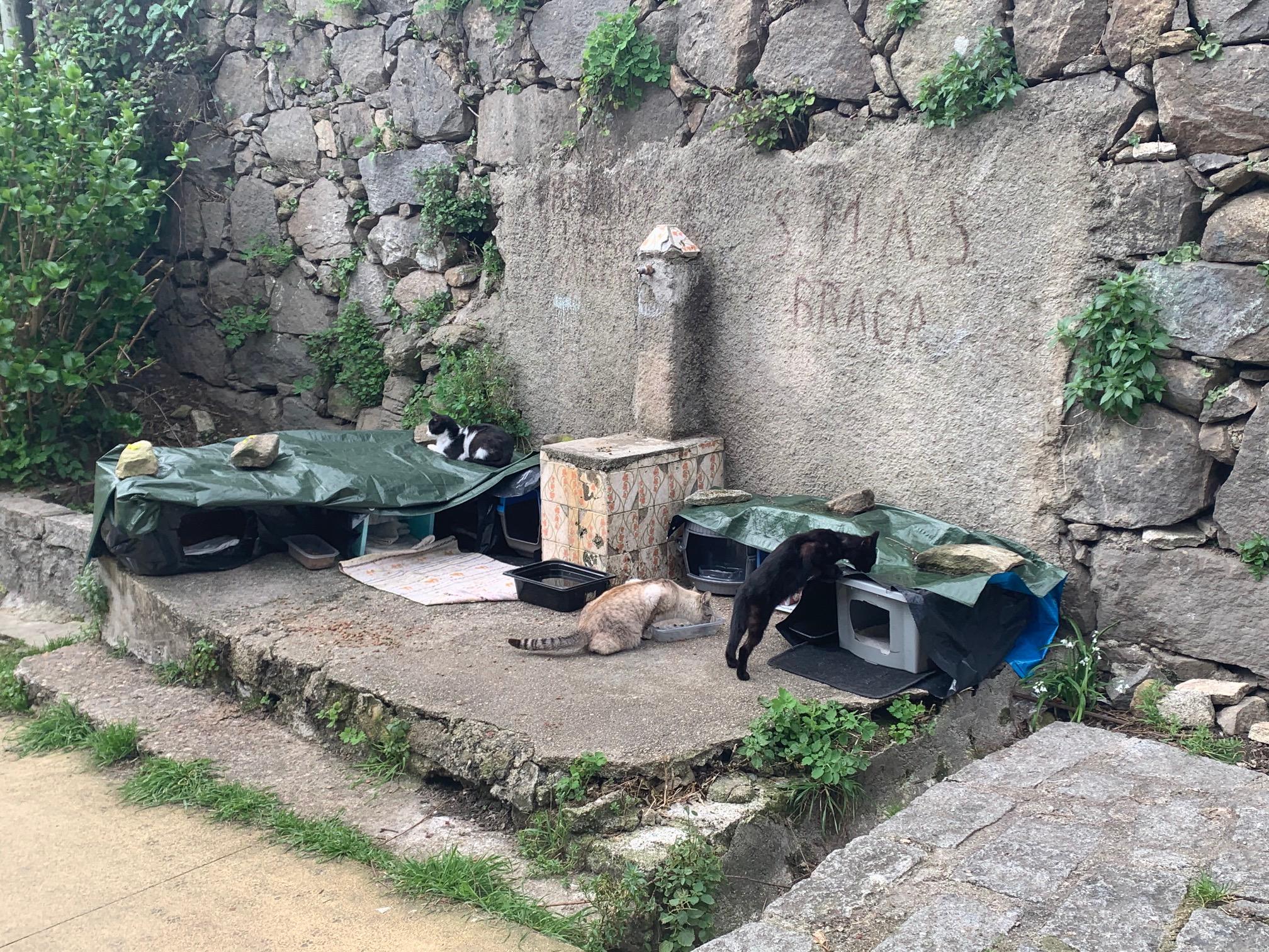 Braga para Todos denuncia abrigos improvisados nos 'Galos' e pede explicações à Câmara