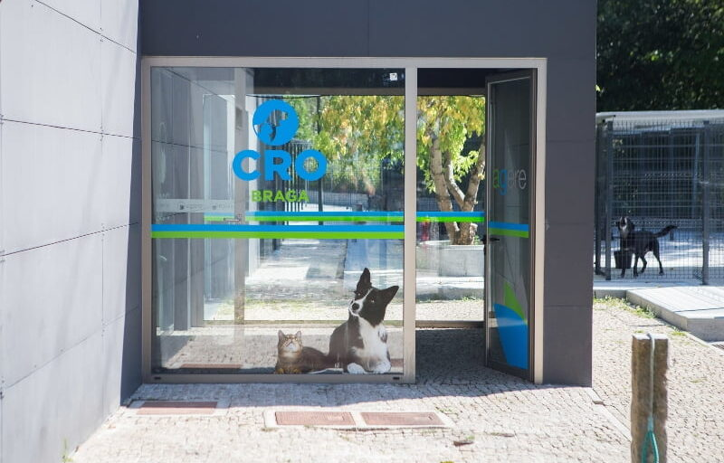 PAN diz que suspensão de voluntariado compromete bem-estar animal no 'canil' de Braga