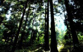 """Floresta pode ser """"enorme oportunidade"""" para o país"""