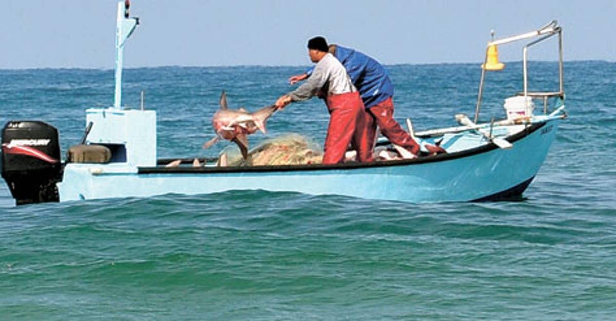 GNR apreende mais de 11 toneladas de peixe e marisco em mega-operação europeia